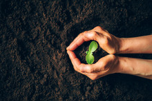 Farmer Hand Holding Young Plant. Top View. Banner. New Life, Eco, Sustainable Living, Zero Waste, Plastic Free, Earth Day, Investment Concept. Gospel Spreading. Nurturing Baby Plant, Protect Nature