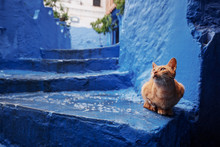 Cat In Blue City. Ancient Arch...