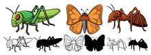 Set Of Insect Cartoon