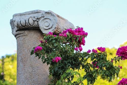 Antalya. Antyczna kolumna ozdobiona pięknymi różowymi kwiatami. Obraz na płótnie