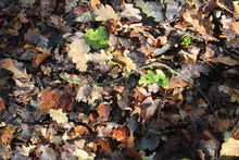 Leaves Decomposing On Forest F...