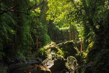 Dense Equatorial Vegetation Tr...
