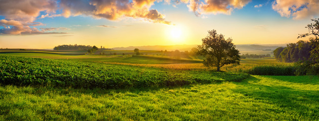 Tranquil panoramic rural landscape scenery in an early summer morning after sunrise, with a tree on green meadows and colorful clouds in the gold and blue sky