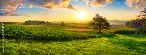 Fotografie, Tablou Tranquil panoramic rural landscape scenery in an early summer morning after sunr