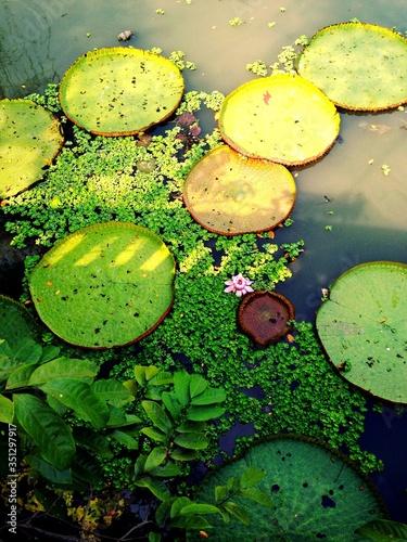 Valokuvatapetti Close-up Of Lily Pads In Lake