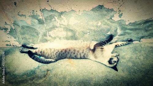 Fotografie, Obraz Upside Down Image Of Sleeping Cat On Footpath
