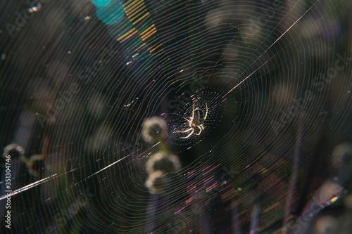 pająk sieć natura wiosna promienie insekt