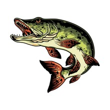 Pike Fish Colorful Vintage Con...
