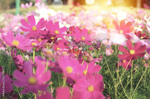 Selective focus on crowd of colourful daisy flowers in the field with glittering bokeh lights in background