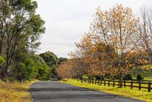 Country Road In Autumn Season,...