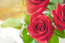 Three Red Roses Close-up In Th...