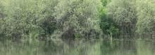 Lush Green Vegetation On The S...