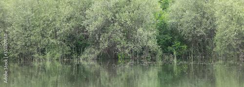 Obraz lush green vegetation on the shore of a pond - fototapety do salonu