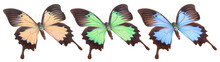 Set Of Colorful Butterflies Is...