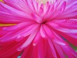 canvas print picture - Macro Shot Of Pink Flower