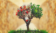 Specialty Unique Bonsai Tree G...