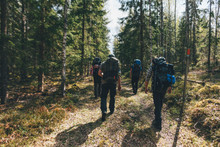 Young People Hiking In Forest,...