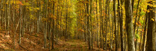 Trails Among Maple And Aspen T...