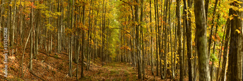 Trails among maple and aspen trees, Maine, New England, United States of America, North America - 351362168
