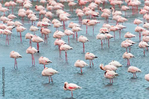 Namibia, Erongo, Walvis Bay, Flamingo-Herde im Meer