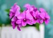 Leinwandbild Motiv Close-up Of Pink Flowers Blooming Outdoors