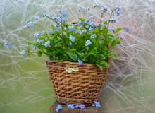 Wicker Basket With A Bouquet Of Forget-me-nots On An Abstract Background. Spring Backdrop.