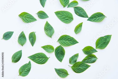 Fototapety, obrazy: High Angle View Of Fresh Leaves Over White Background