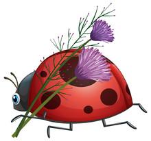 Ladybug With Purple Flower