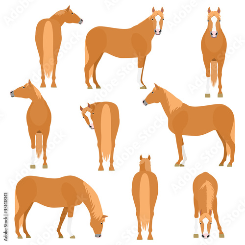 Fototapeta horse various pose set obraz