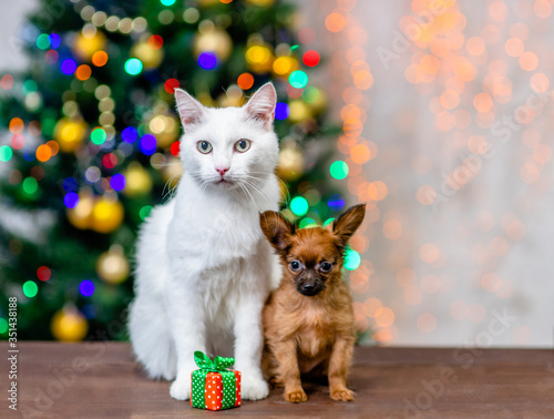 Adult angora cat and tiny toy terrier puppy sit together with gift box with Christmas tree on background Canvas Print