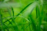 草原 雨の水滴 クローズアップ