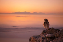 Burrowing Owl Enjoys The Sunse...