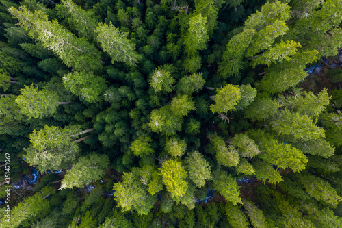 Aerial top view of a large group of green trees in the forest