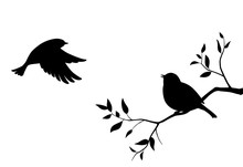 二羽の鳥と木の枝