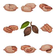 Pecan Nut Kernel In Shell And ...