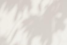Leaf Shadows On A Cement Background Illustration