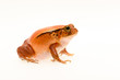Close-up Of Frog On White Background