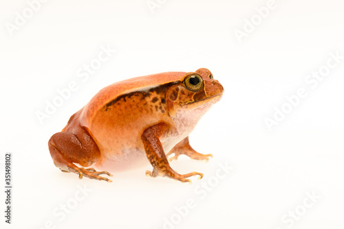 Photo Close-up Of Frog On White Background