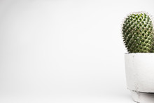Close Up Of Cactus Against White Background