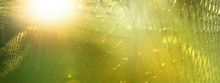 Blur Summer Sunlight With Gree...