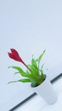 Tilt Image Of Flower Vase On White Table