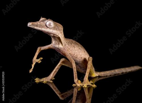 Valokuvatapetti Close-up Of Gecko Against Black Background
