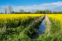 Yellow Rape Field And Drainage...