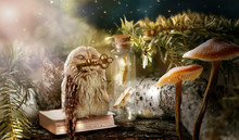 Fantasy Wise Sleeping Owl Is T...