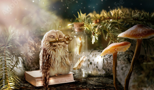 Fotomural Fantasy wise sleeping owl is the keeper of secrets holds key to knowledge in bea