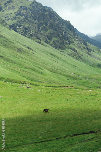 Caucasus green hills near Elbrus national park, beautiful summer sunny landscape with horses, Russia