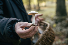 Mushroom In The Hand