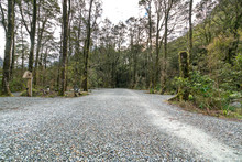 Gravel Road Amidst Trees In Fo...