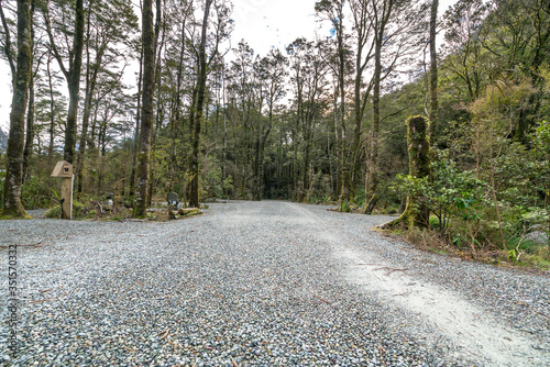 Gravel Road Amidst Trees In Forest Wallpaper Mural
