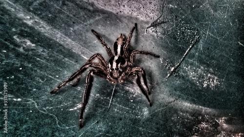 Slika na platnu Close-up Of Spider On Wall